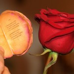 10 Самых Интересных Фактов о Цветах!