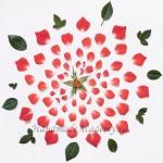 Цветы из Ткани: Как сделать лучшие выкройки (Часть 1)